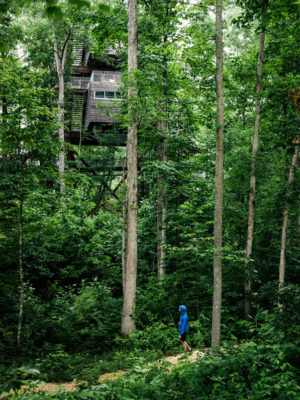 The Living Treehouse Green Building And Design Green