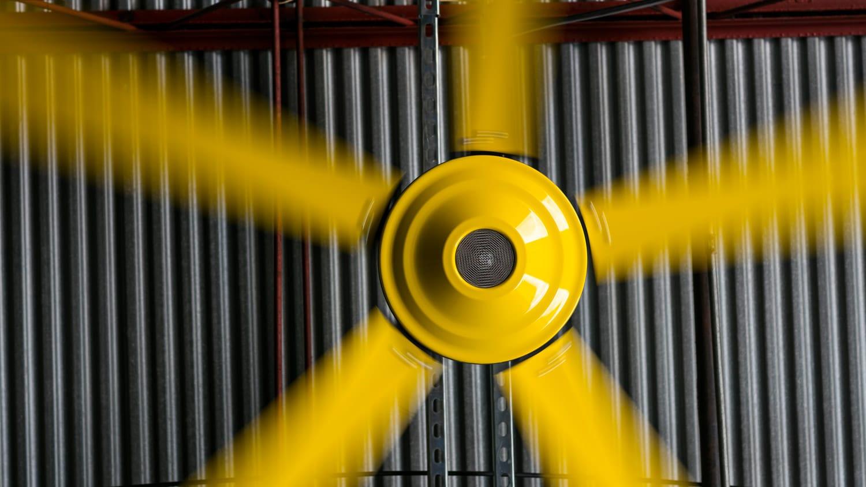 Yellow Entrematic fan