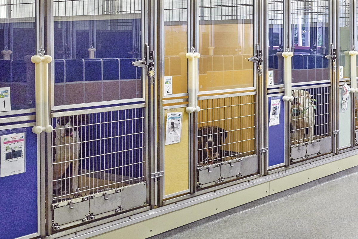 mason company blue and yellow kennel